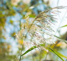 flowering Cane closeup with pastel coloured background  by PhotoStock-Isra