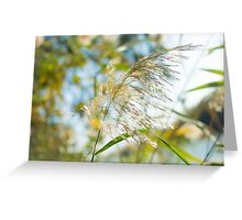 flowering Cane closeup with pastel coloured background  Greeting Card