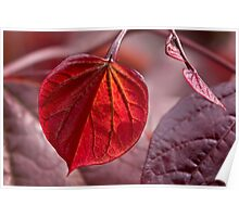 Leafing out in red Poster