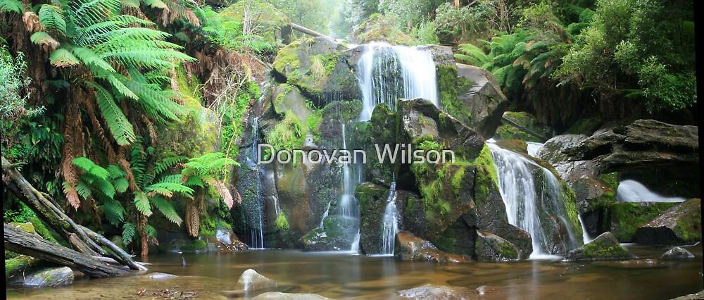 secret delight by Donovan Wilson