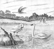 Trumpeter Swans - Charcoal by Gordon Pegler