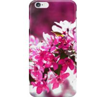 Pink Tree Blossom iPhone Case/Skin