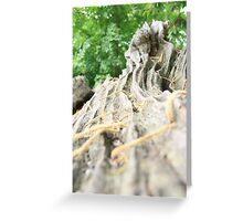 Tree trunk Greeting Card