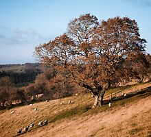 AUTUMN TREE ON A HILLSIDE by Michael Carter