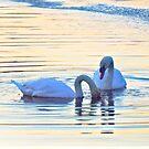 Swan Song (6022) by sensameleon