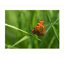 Comma Butterfly Art Print