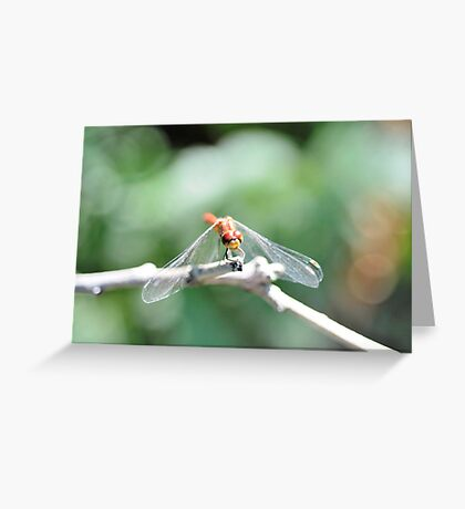 Lonely Dragon One Greeting Card