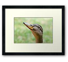 Cool Duck  Framed Print