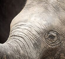 Young and Wrinkly by Jim Moore