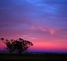 Colours of the Morning by Matt Harvey