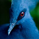 Victoria Crowned Pigeon by Playful Photo