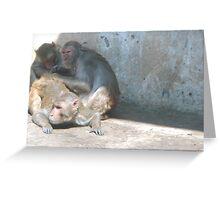 Temple Monkeys Greeting Card