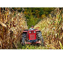 Old farmer driving the tractor in the cornfield Photographic Print