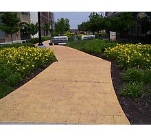 yellow brick road Photographic Print