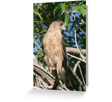 hawkeye Greeting Card