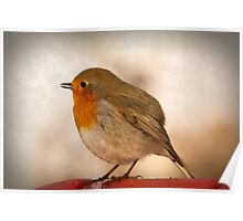 Robin with textured background. Poster