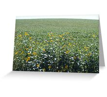 Carpet of green leaves adorned with black eyed susans Greeting Card