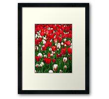 Sea of Tulips Framed Print