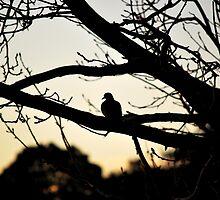 Bird On A Tree by Maria de Vera