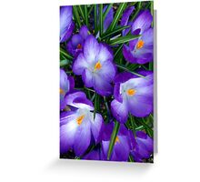 Stunning Purple Flowers Greeting Card
