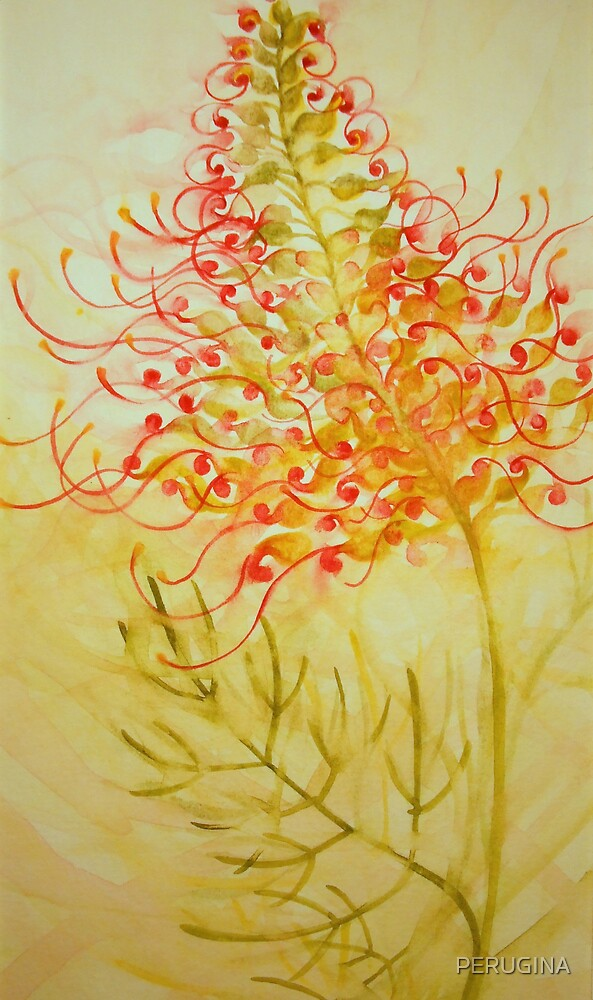grevillea 'for the love of flowers' © 2007 patricia vannucci  by PERUGINA
