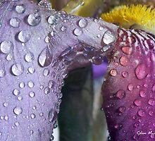 The Wet Look by GlenMar10