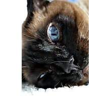 Funny Cat Photographic Print