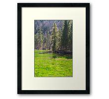 Bright Framed Print
