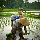 Rice Workers - Bali, Indonesia by Stephen Permezel