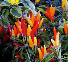 Fiesta Peppers by Candace Byington