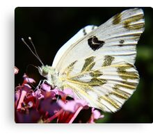 Gold Dust Butterfly Canvas Print