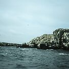 Cliffs of Farne, Sea Houses Bamburgh Northumberland England 198405280007m by Fred Mitchell