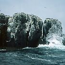 Close to cliffs of Farne Sea Houses Bamburgh Northumberland England 198405280008m  by Fred Mitchell