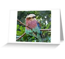 avian colours Greeting Card