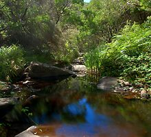 She-Oak Creek by DaveHarkin