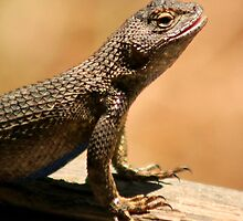 Western Fence Lizard by Anne-Marie Bokslag