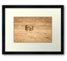 Prairie Chicken 2013-13 Framed Print