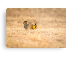 Prairie Chicken 2013-13 Metal Print