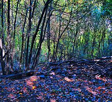Topanga Forest by Vinchy