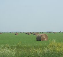 Hay! Round Bales by Stephen Thomas