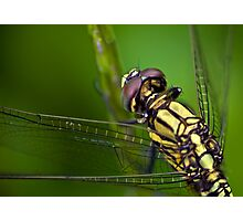 Dragon fly Photographic Print