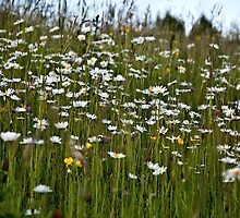 Wild flowers by PhotosByHealy