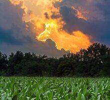 Sunset Cornfield by Kenneth Keifer