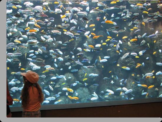 Now That's A Fish Tank!!!! by gypsykatz