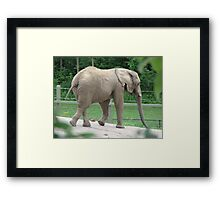 Only 4  1/2 Tons...Toronto Zoo Framed Print