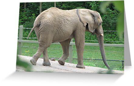 Only 4  1/2 Tons...Toronto Zoo by gypsykatz