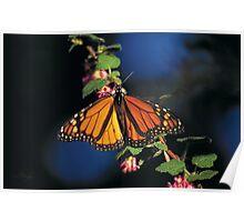 Monarch Grove Santuary  •  Pacific Grove Poster