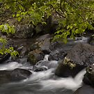 Mungalli Rapids by AnnieD