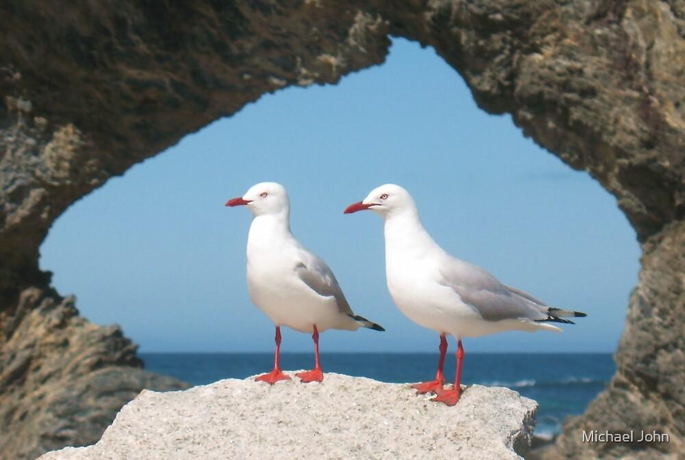 Birds in Australia by Michael John