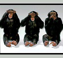 Three Monkeys by Patricia Johnson